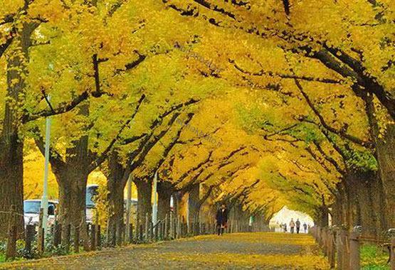 مناطق گردشگری مناطق توریستی سفر به ژاپن توریستی ژاپن بهترین مناطق گردشگری بهترین مناطق توریستی