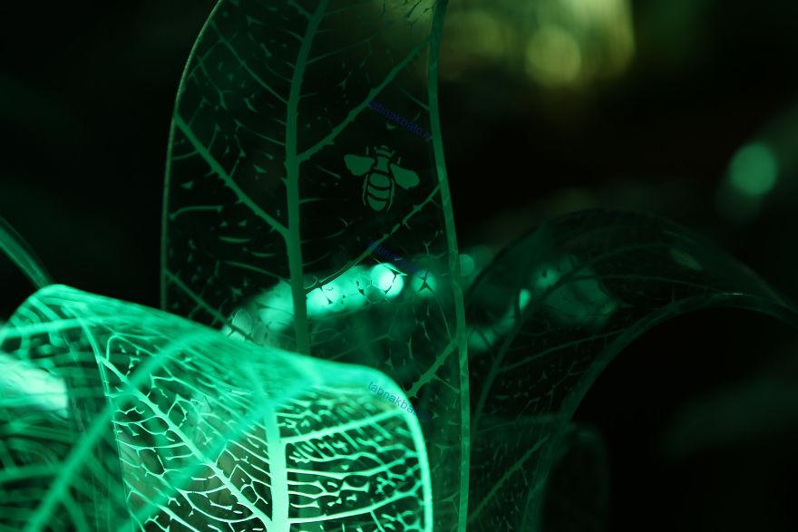 خلق گیاهان همیشه سبز در تاریکی