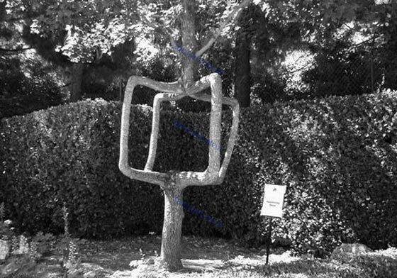 متفاوت ترین درختان جهان در سیرک درختان