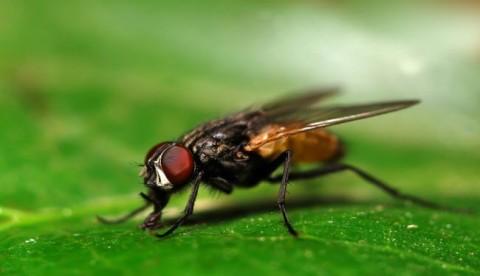 چرا کشتن مگس برای انسان سخت است؟