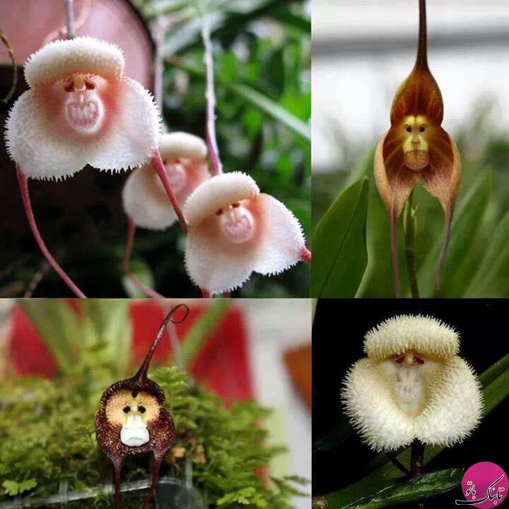 کمیاب ترین و عجیب ترین گل های جهان 1