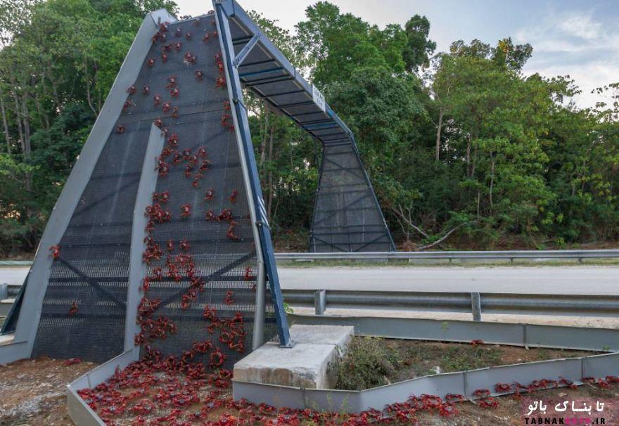 10 پل شگفت آور برای عبور حیوانات و نجات جان آنها
