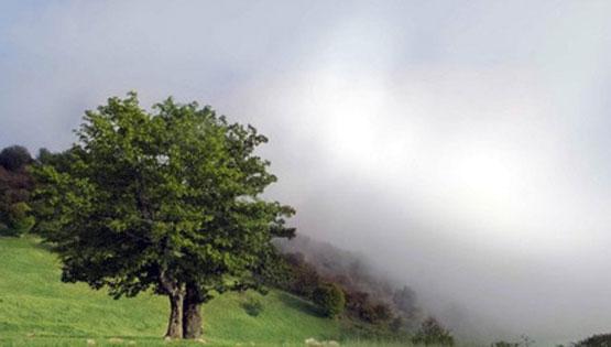 تحقق رویای راه رفتن روی ابرها در جنگل ابر