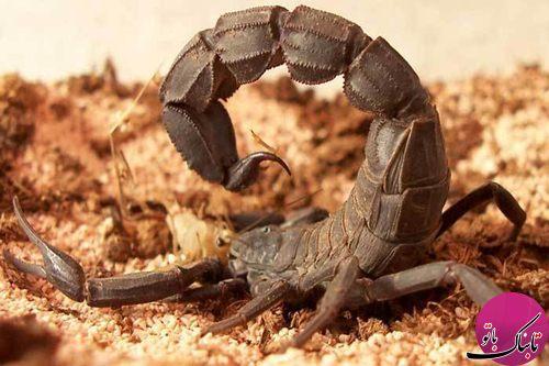 استفاده از «حشرات» در جنگ ها