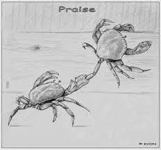 دلیل عجیب مرگ خرچنگها در جعبه