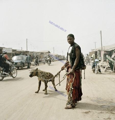 تصاویر جالب از «کفتارهای دستآموز» در خیابان