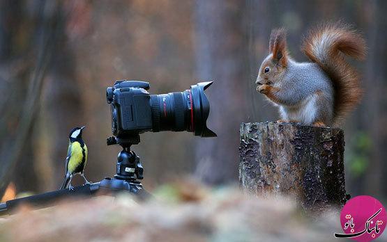 بازیگوشی سنجابها از دریچه دوربین عکاس روس