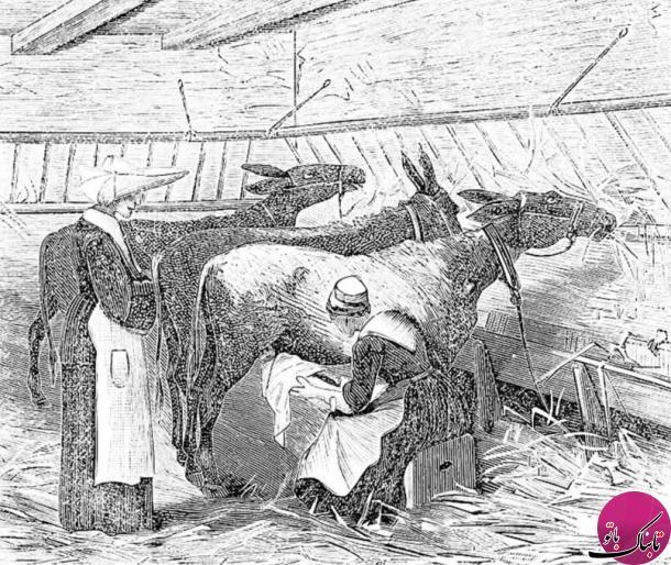 مصارف شیر الاغ در طول تاریخ