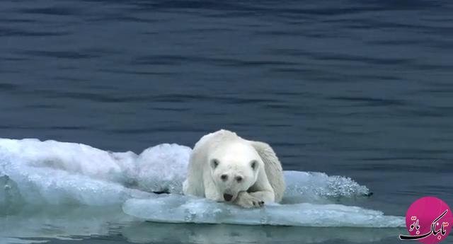 اگر یخ های زمین آب شود چه اتفاقی می افتد؟!