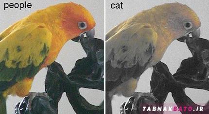 گربه ها دنیا را چه شکلی می بینند؟