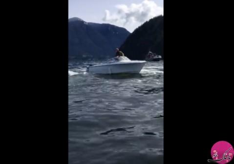 پرتاب قایق توسط نهنگ قاتل برای شکار شیر دریایی