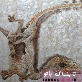 کشف رنگ واقعی دایناسورها