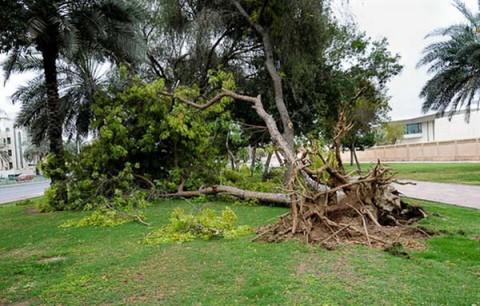 لحظه کنده شدن درخت از ریشه توسط طوفان
