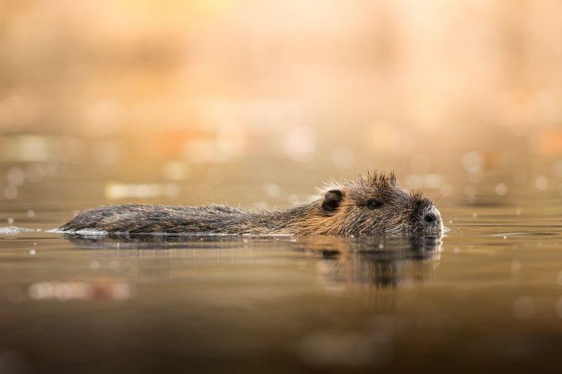 آبتنی یک موش سوژه نشنال جئوگرافیک +عکس