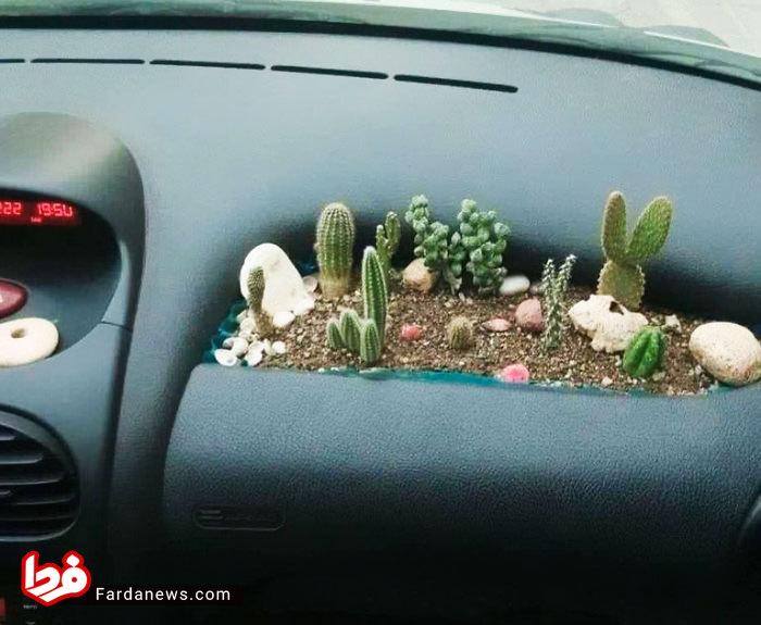 باغچه کاکتوس در خودرو ۲۰۶+عکس