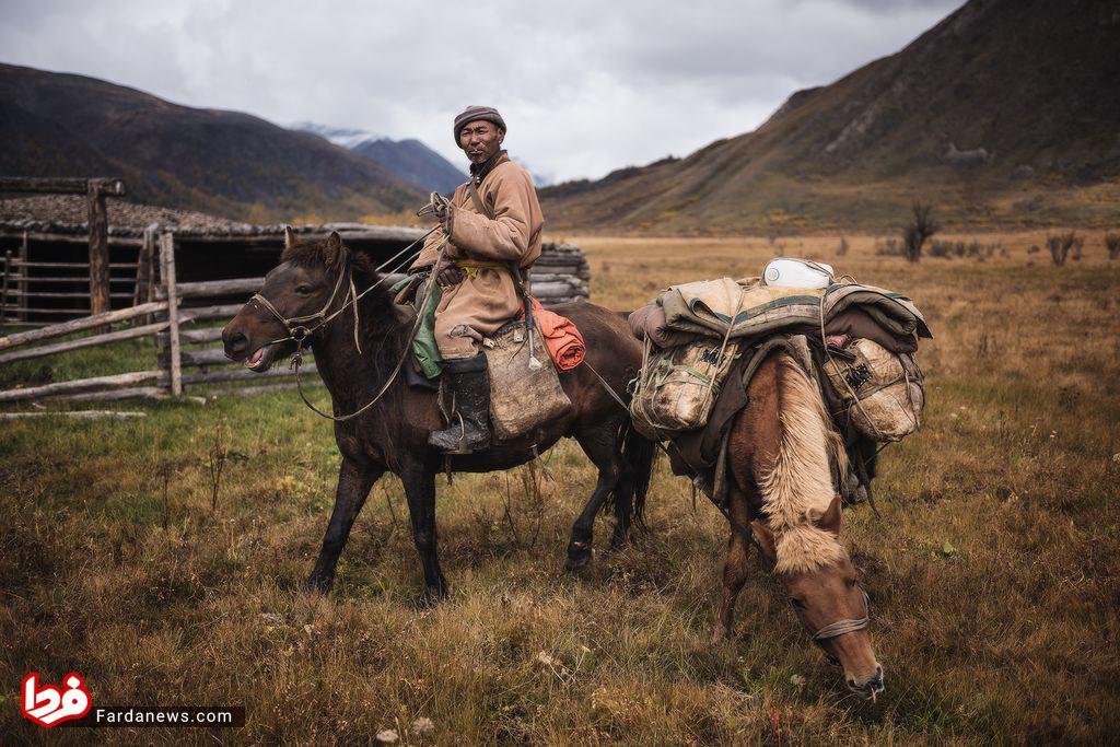 مسافرت مرد مغولی با اسب هایش سوژه شد +عکس