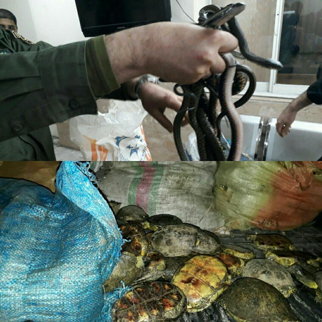 کشف ۲۳۰۰ لاک پشت و مار آبی در بازار تهران+عکس