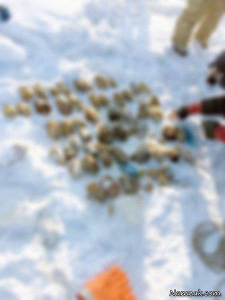 کشف جنجالی ۵۴ دست قطع شده انسان میان برف+تصاویر