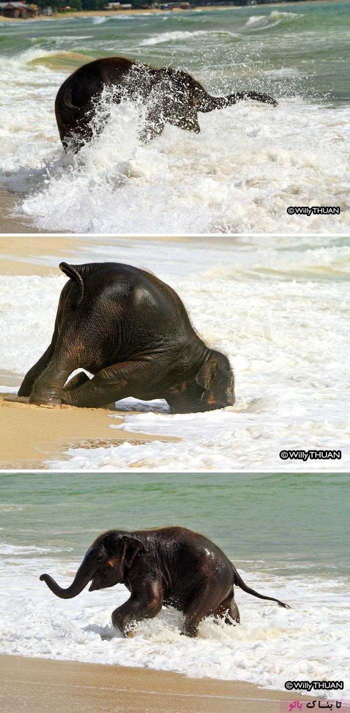 این بچه فیل ها شما را به خنده می اندازند