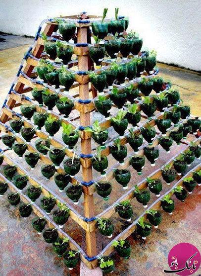 با وسایل دورریختنی چه کارها که نمیشود کرد؛ ایده برای ساخت گلدان با بطریهای پلاستیکی