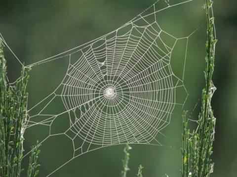 وقتی تار عنکبوت بوم نقاشی میشود!