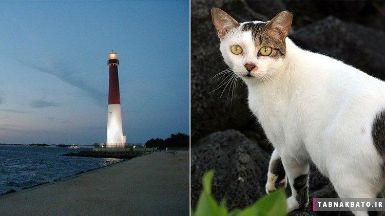 گربه ای که به تنهایی یک نوع پرنده را منقرض کرد!