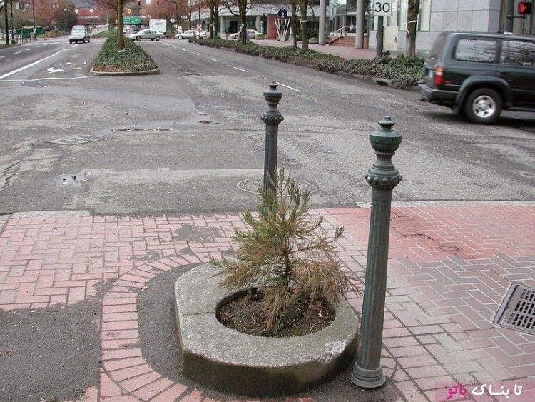 کوچکترین پارک دنیا به اندازه ی یک گلدان