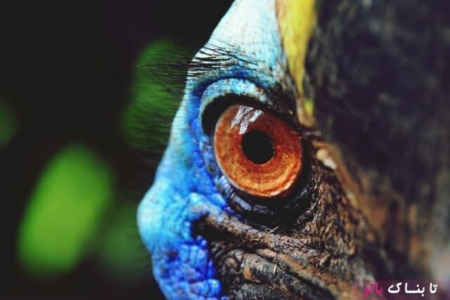 خطرناک ترین پرنده جهان هر سال ۲۰۰ قربانی می گیرد