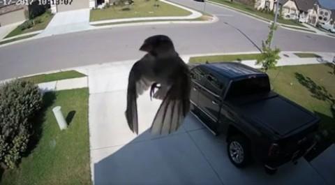 فیلم جالب و گیج کننده پرواز پرنده با بالهای ساکن