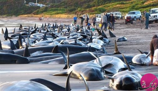 خودکشی نهنگ آبی خطر پیش روی جوانان، از روسیه تا هند