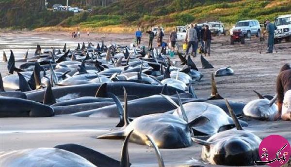 خودکشی نهنگ آبی خطر پیش روی جوانان