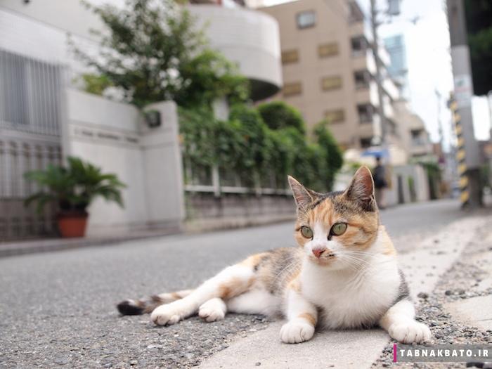 راه حل جالب ژاپنی ها برای گربه های مزاحم