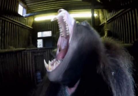 صحنه هایی بامزه از خمیازه کشیدن حیوانات