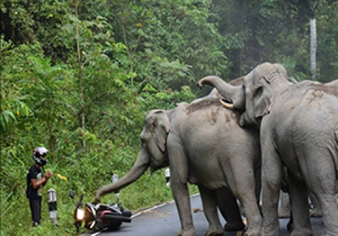 حمله فیل خشمگین به موتورسوار