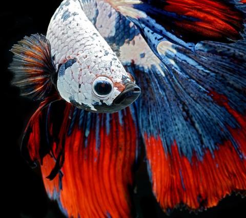 زیباترین و عجیب ترین ماهی های دنیا