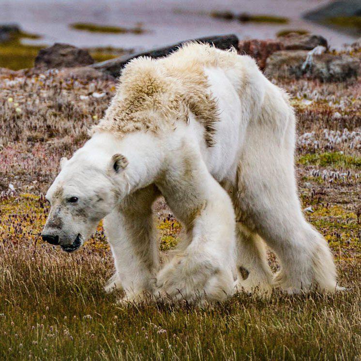 اما چرا گروه عکاس این خرس را نجات ندادند؟