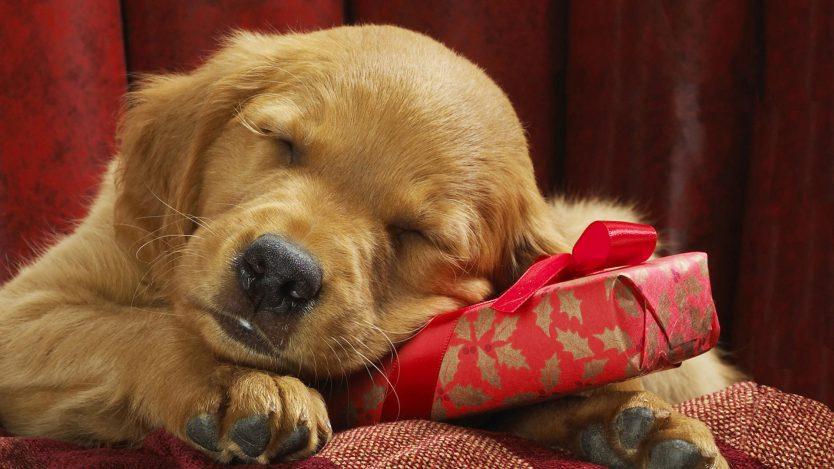 چرا نگهداری از حیوانات خانگی اساساً غیراخلاقی است؟