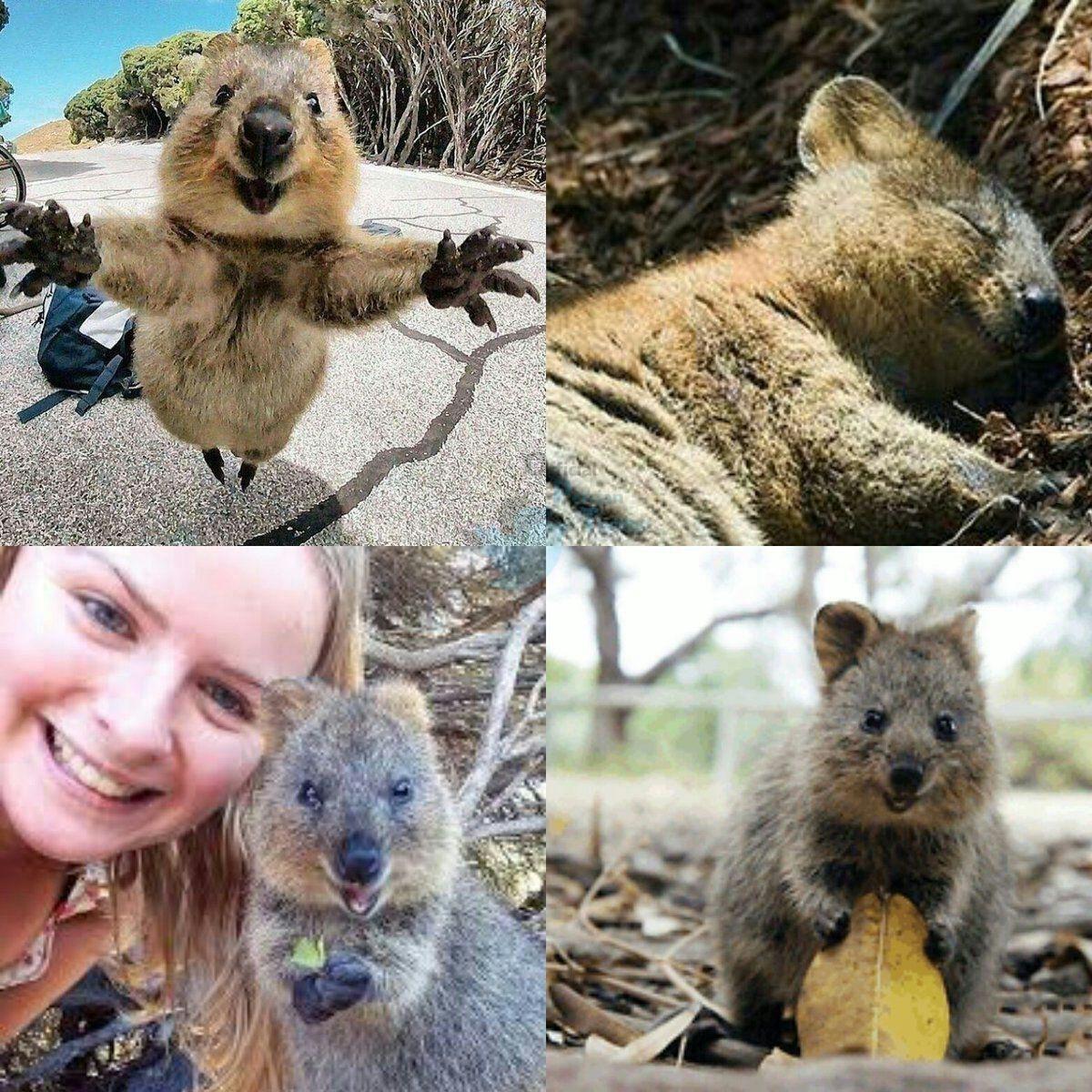 این حیوان به عنوان شادترین حیوان جهان شناخته شده+عکس