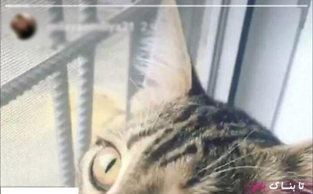 گربه ای که راز یک خیانت را افشا کرد!