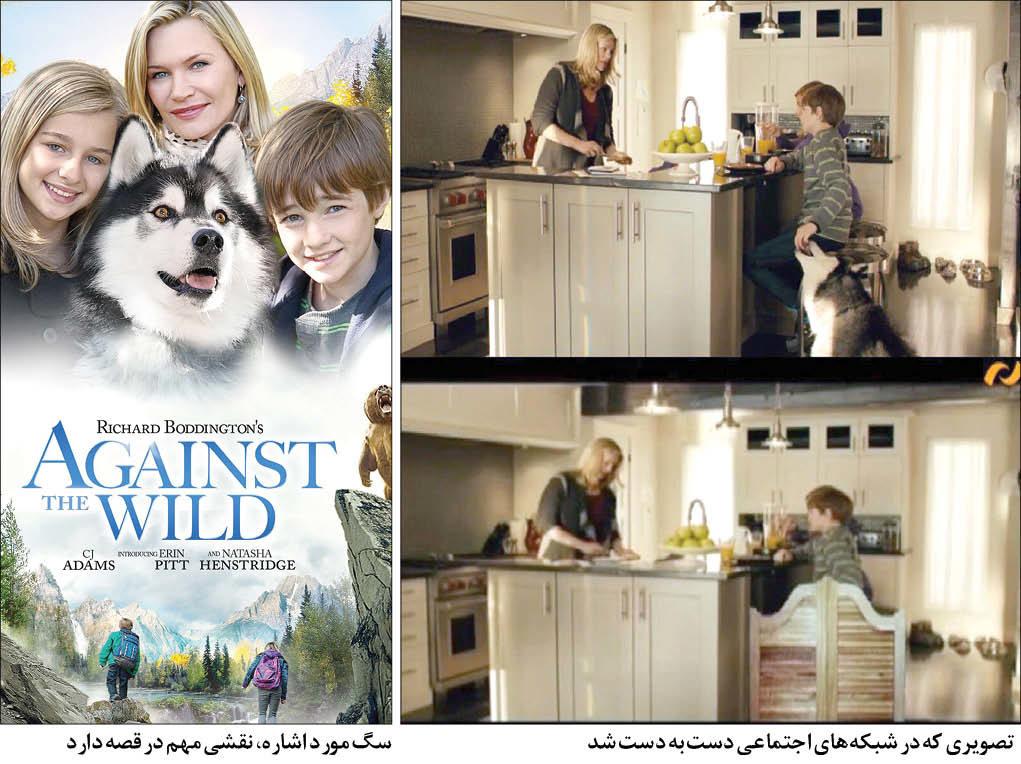 ممیزی سگ، کار دست تلویزیون داد +عکس