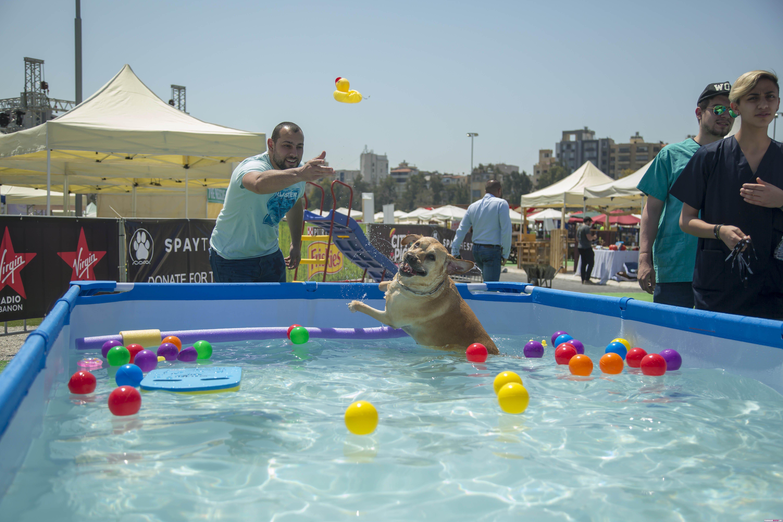 جشنواره ی عجیب  برای تفریح سگ ها در لبنان!