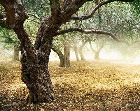 لحظه سقوط درخت تنومند بر اثر وقوع طوفان