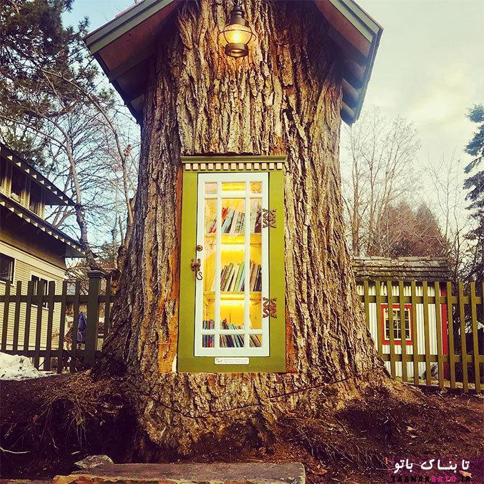 وقتی یک درخت قدیمی، کتابخانه میشود!