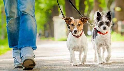 هواخوری و ماشین سواری جالب سگ
