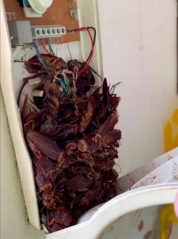 تصویری ترسناک از داخل گوشی تلفن خانهای در سیدنی