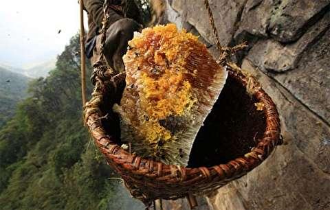 گوشهای از فرآیند بدست آوردن عسل طبیعی!
