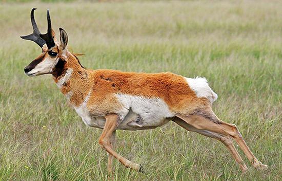 سریعترین حیوانات جهان را بشناسید