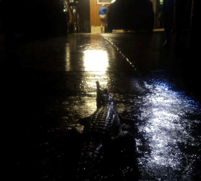 مارها و کروکودیلها در خیابانهای استرالیا +عکس