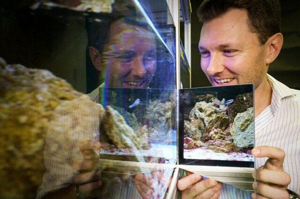 ماهیها تصویر خود را در آینه تشخیص میدهند+عکس