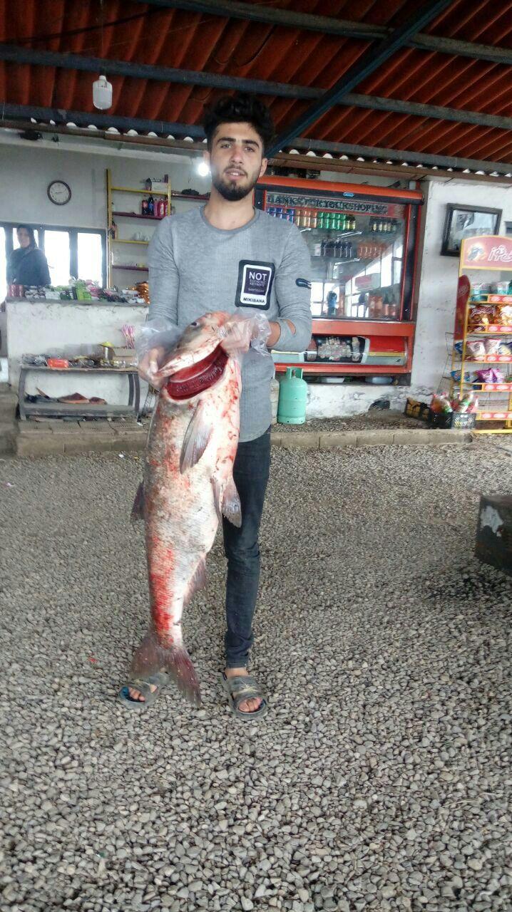 صید ماهی ۲۰ کیلویی در مازندران+عکس